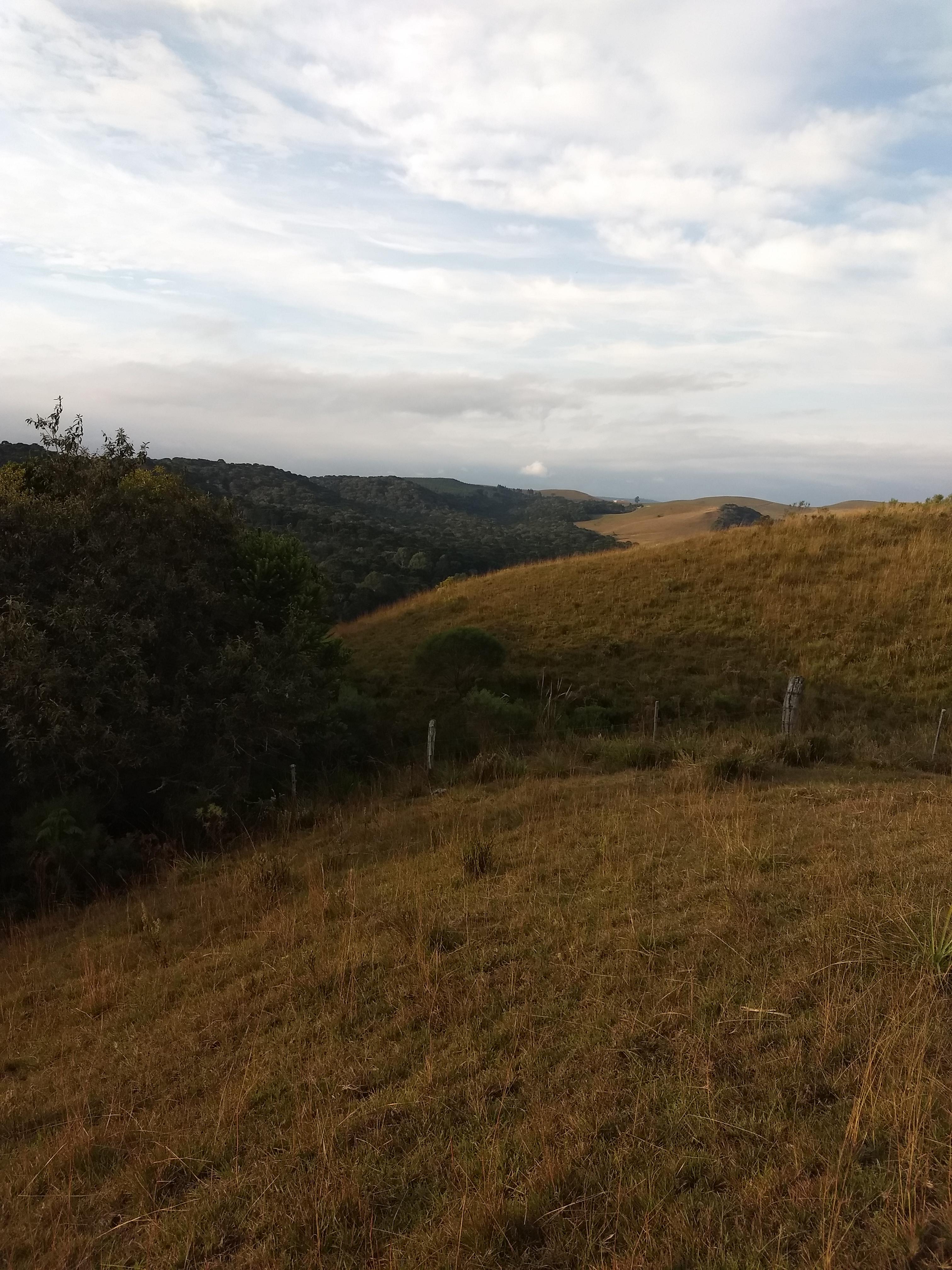 Área rural com campo e mato