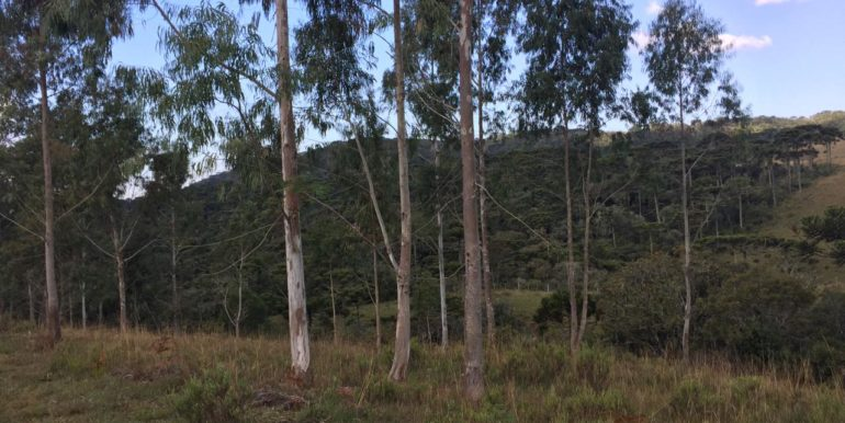 área sf 05